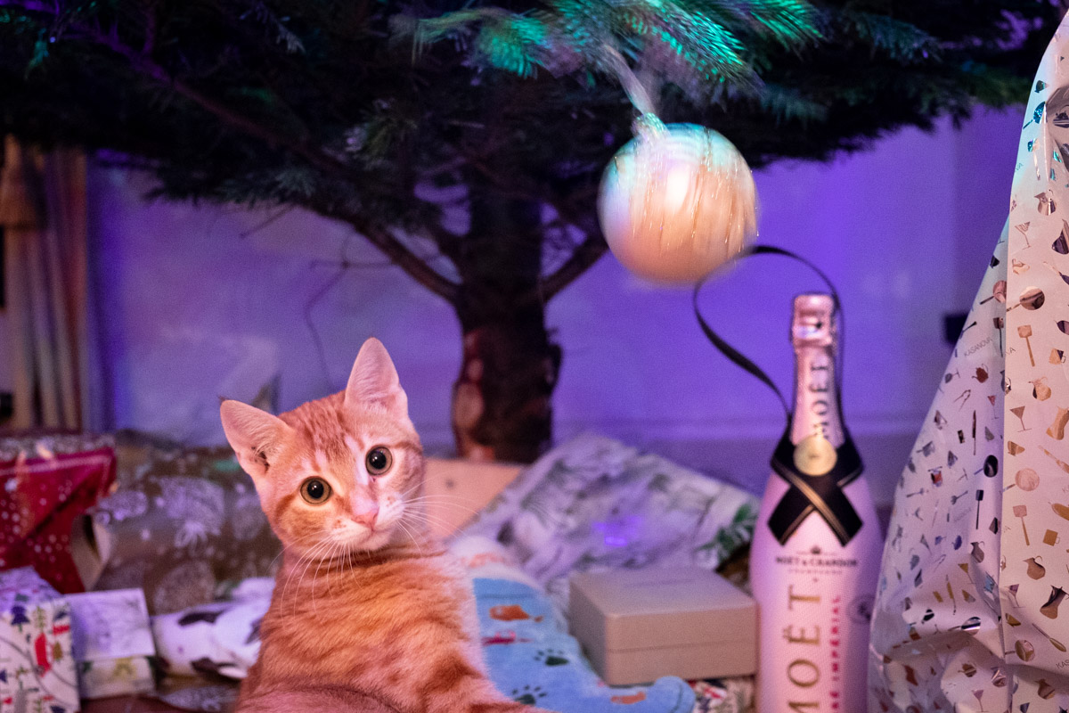ginger kitten under a christmas tree